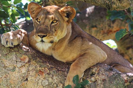 wildlife queen - 3 day trip queen elizabeth national park - African Adventure Travellers