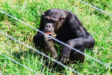 1 Day Ngamba Chimp Island