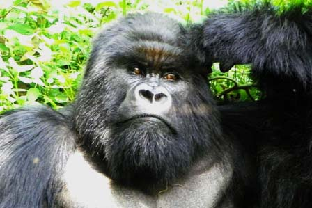 3 Days Gorillas Bwindi