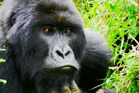 9 Days Primate Safari Kibale-Queen-Bwindi