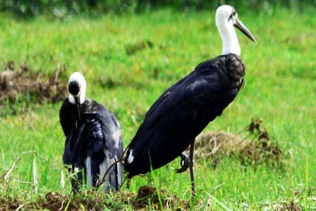4 Days Birding Rwanda