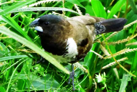 4 Days Birding and Primate adventure in Kibale Forest