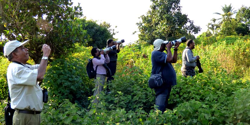 Bird watching on a 12 Days Birding Safari trip