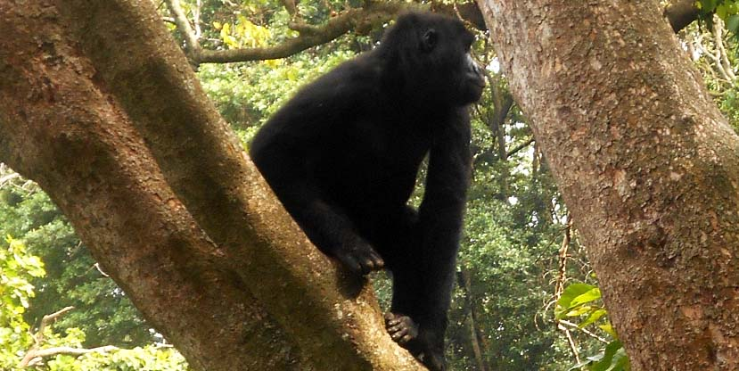 3 Days gorilla tracking congo