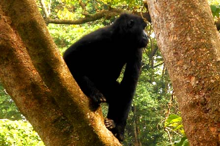 3 Days Gorillas Congo - Congo Safaris