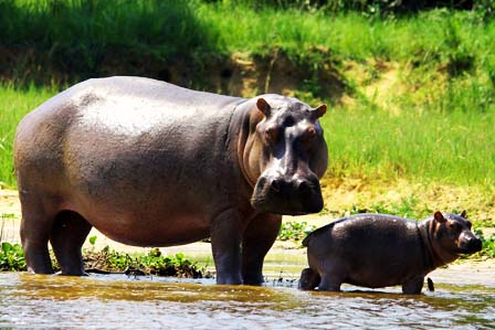 9 Days Uganda wildlife safari - 3 Days Murchison Falls Safari - Wildlife tour