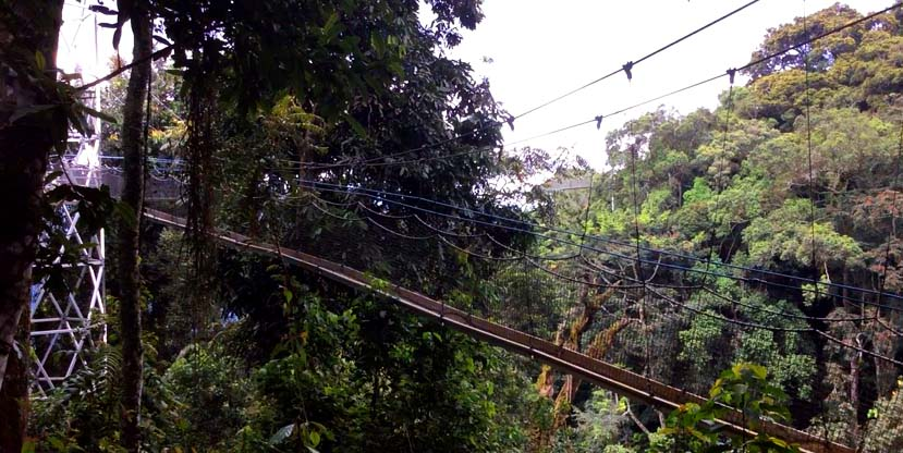 Canopy trail in the Nyungwe National Park