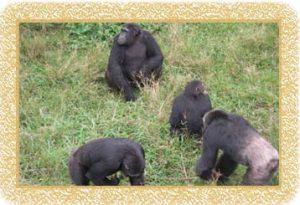 3 Days Gorilla Trekking Rwanda
