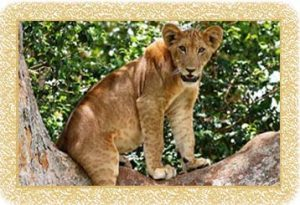 9 Days Primate Safari