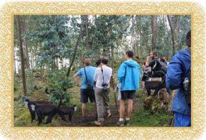 7 Days Adventure Uganda's Apes