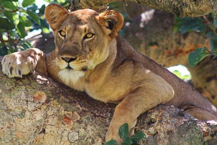 wildlife queen - 3 day trip queen elizabeth national park - African Adventure Travellers