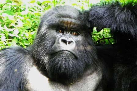 3 Days Gorillas Bwindi