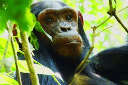 4 Days Primate Adventure Kibale