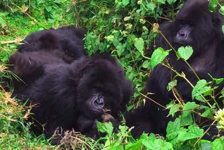 5 Days Gorillas Uganda and Rwanda