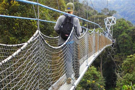Nyungwe National Park - African Adventure Travellers