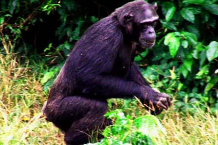 9 Days Best of Uganda