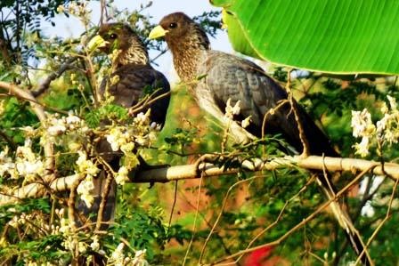 12 Days Birding Safari - African Adventure Travellers