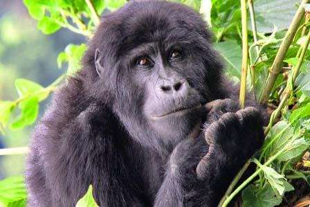 Bwindi Impenetrable Forest Park - African Adventure Travellers
