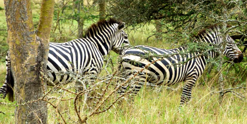 3 days lake Mburo and Queen Elizabeth national park safari