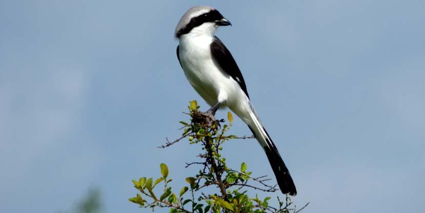 12 Days Birding Safari