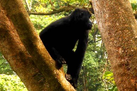 3 Days Virunga gorilla trek - African Adventure Travellers