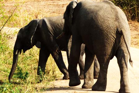 3 days murchison falls safari trip - African Adventure Travellers