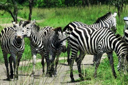 7 Days Wildlife Lake Mburo and Lake Bunyonyi