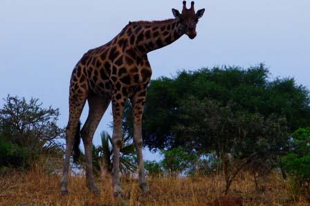 9 Days Primate Kibale, Queen Elizabeth and Bwindi