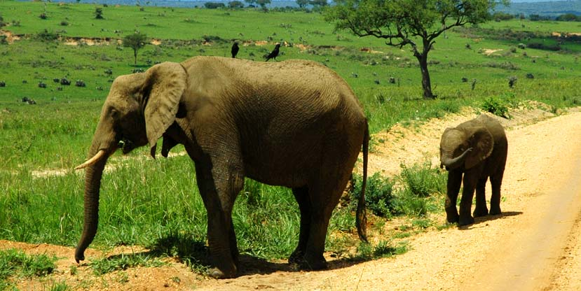 Elephants spotted on a 14 days wild adventure tour