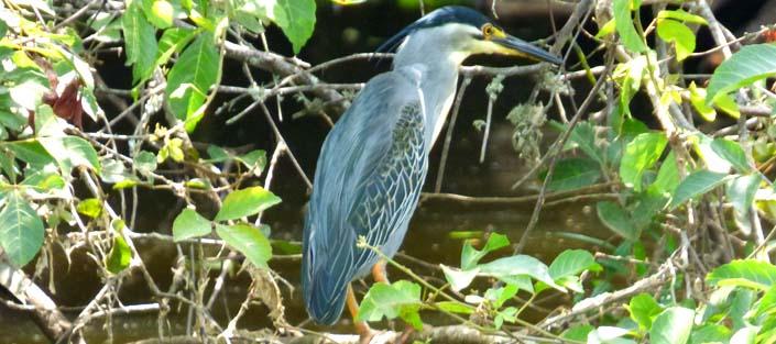 11 Days Birding Uganda