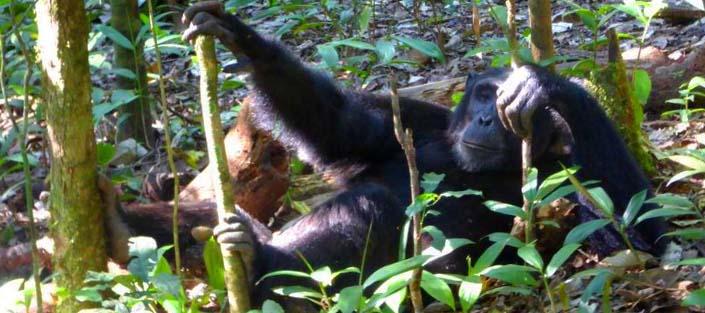 4 Days Primate Adventure Kibale Forest