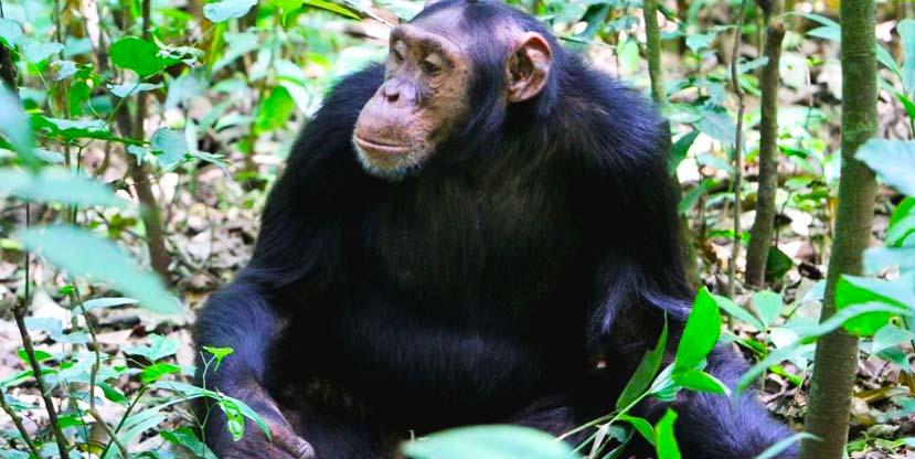 8 Days Discover Uganda
